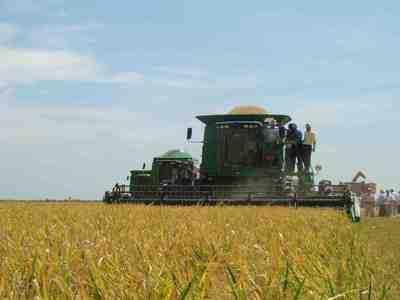 Las lluvias ya afectan a  las plantaciones de arroz