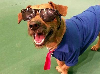 El perro Chiruzo saludó a sus fans a través de las redes sociales