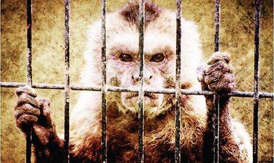 """""""Prisión domiciliaria"""" para mono patotero"""