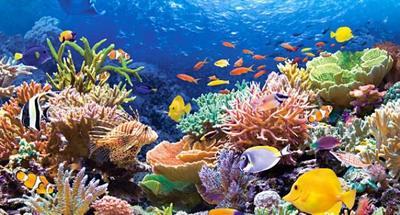 Muere el 35% de la Gran Barrera de Coral australiana