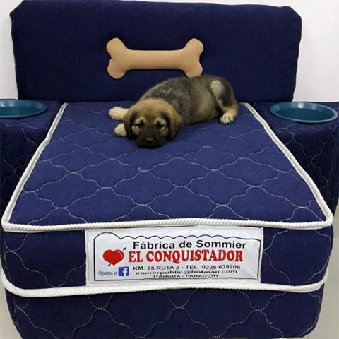 Fabrican sommiers para perros en Itauguá » Ñanduti
