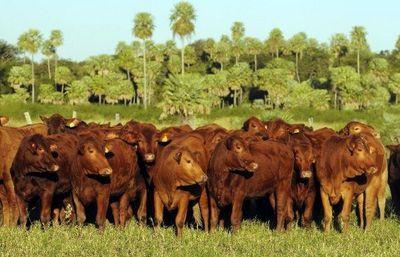 Carne natural: la gran apuesta paraguaya