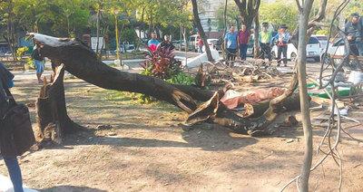 Caída de árbol puso fin a su vida