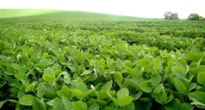 La soja fue el mayor producto de exportación nacional en el 2016
