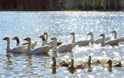 El lago de las plumas