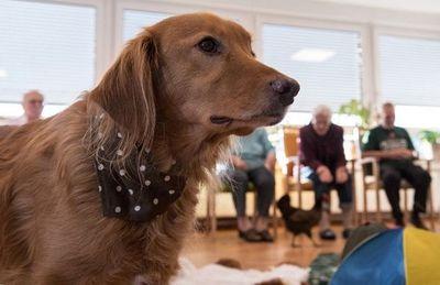 Tratamientos de ansiedad y depresión con animales