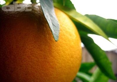 Naranjas... de la China