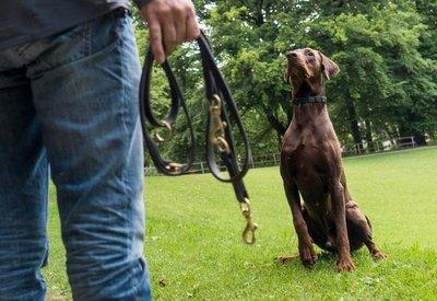 Con entrenamiento y elogio los perros aprenden a obedecer