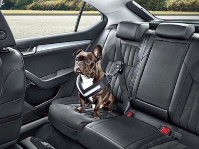 Perro debe ir siempre asegurado en el auto