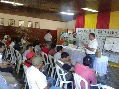 Lanzan campaña de sésamo en Horqueta