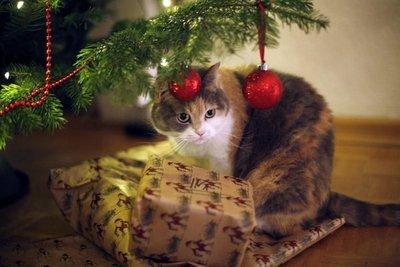 Decoración de Navidad segura para las mascotas