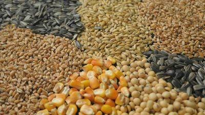 Aumentarán controles de semillas para reforzar calidad de productos
