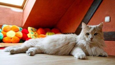 Feromonas ayudan a gatos y perros en situaciones de estrés