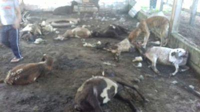 Un león habría sido el autor de la masacre de 16 ovejas