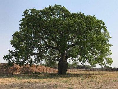 Ambientalistas, contra deforestación en el Chaco