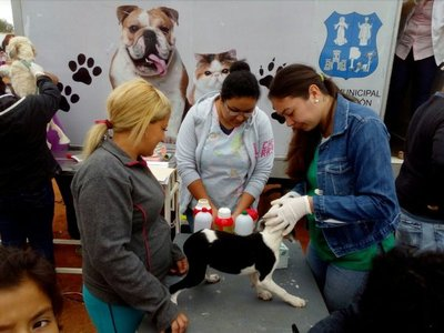 Mascotas: Se debe castrar tanto a machos como a hembras