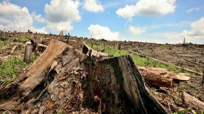 Marito derogó decreto sobre deforestación promulgado por Cartes