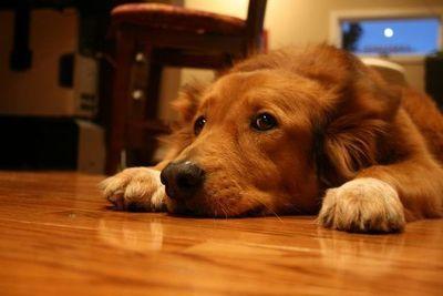 Pirotecnia causa dolor en los animales