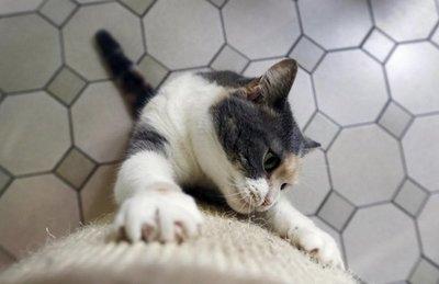 Un gato que rasguña puede estar aburrido