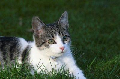 Cuando el gato deja de comer puede ser por dolor o estrés