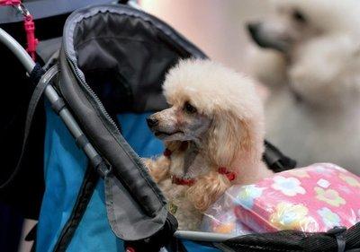 Cuando las mascotas sufren en silencio el excesivo amor de sus dueños