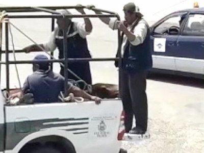 Un toro causa zozobra en el aeropuerto de Sucre