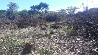Denuncian tala de árboles nativos en predio del IPS