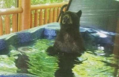 Pareja arrendó una cabaña para sus vacaciones y un oso se metió en el jacuzzi