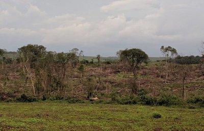 Constatan deforestación de más de 37 hectáreas