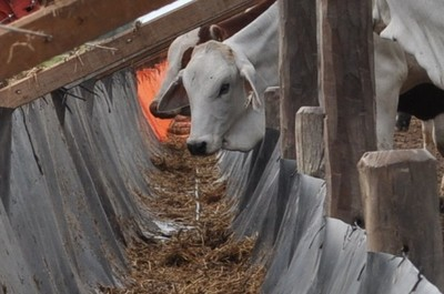 Ofrecen un servicio de confinamiento de ganado como opción para inversionistas vinculados o no a la actividad ganadera