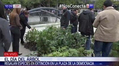 Entregaron plantines en Asunción