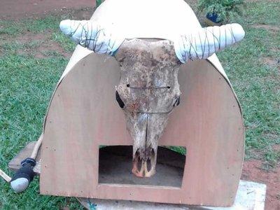 Ofrecen hasta delivery de cuerno para el toro candil