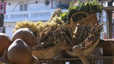 Ante cambio de temperaturas muchos optan por las hierbas medicinales