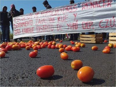 Tomateros exigen mayor control de contrabando ante baja cotización