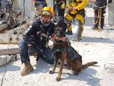 Muere Chichí, uno de los perros rescatistas del sismo en México