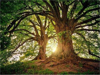 Árboles y plantas podrán almacenar más CO2 a finales de siglo