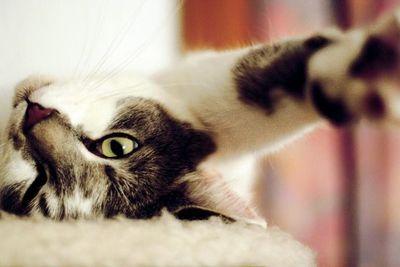 Enseñando al gato a comportarse mejor