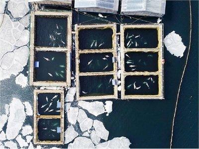 """Multan con USD 2 millones a empresas por la """"cárcel de ballenas"""""""