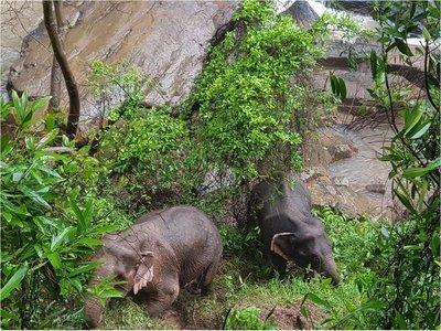 Hallan 5 elefantes muertos en la cascada donde se cayeron otros 6