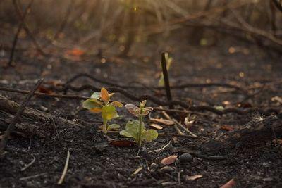 El Pantanal que arde pero no muere