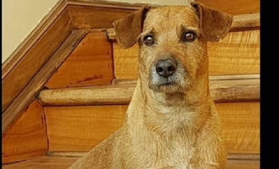 El perro Chiruzo está delicado de salud