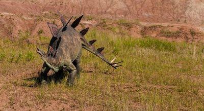 Hallan el estegosaurio más completo de Europa en un almacén portugués