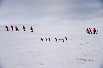 """Antártida, codiciado destino del """"turismo de última oportunidad"""""""