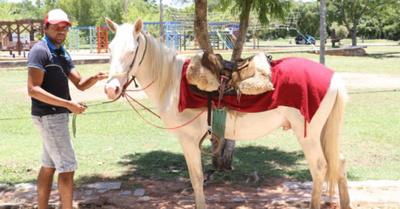 """""""Pegaso"""", caballo de oro que pasea por Areguá"""