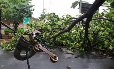 HOY / Bienvenida al nuevo intendente: más de una treintena de árboles caídos en Asunción