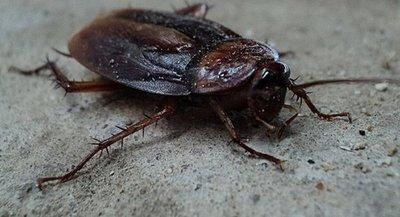 Operan a cucaracha y le salvan la vida