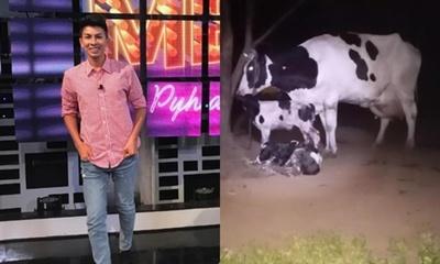 Toñito Gaona también tiene sus vacas