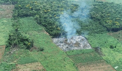 Silva Facetti denuncia ante Fiscalía destrucción de área boscosa