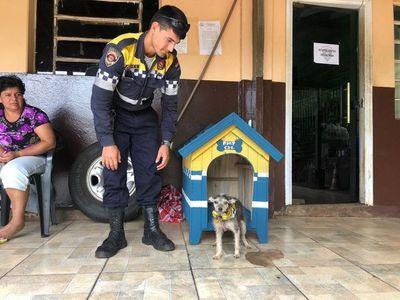"""Veterinaria asiste a perrita que mordió a """"Kelembu"""""""