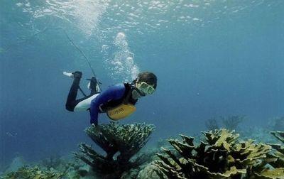 Crean un pulmón artificial que permite respirar bajo el agua